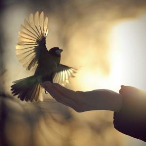 oiseaux22